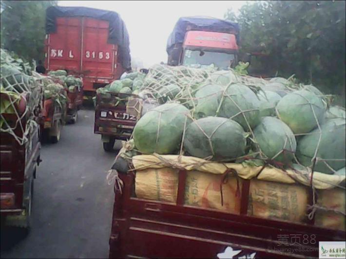 河南西瓜品种齐全(开封西瓜大量上市)