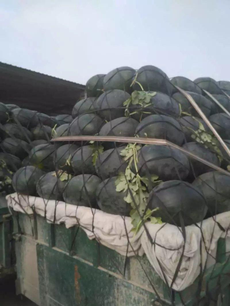 河南西瓜-河南西瓜品种齐全-河南西瓜价格