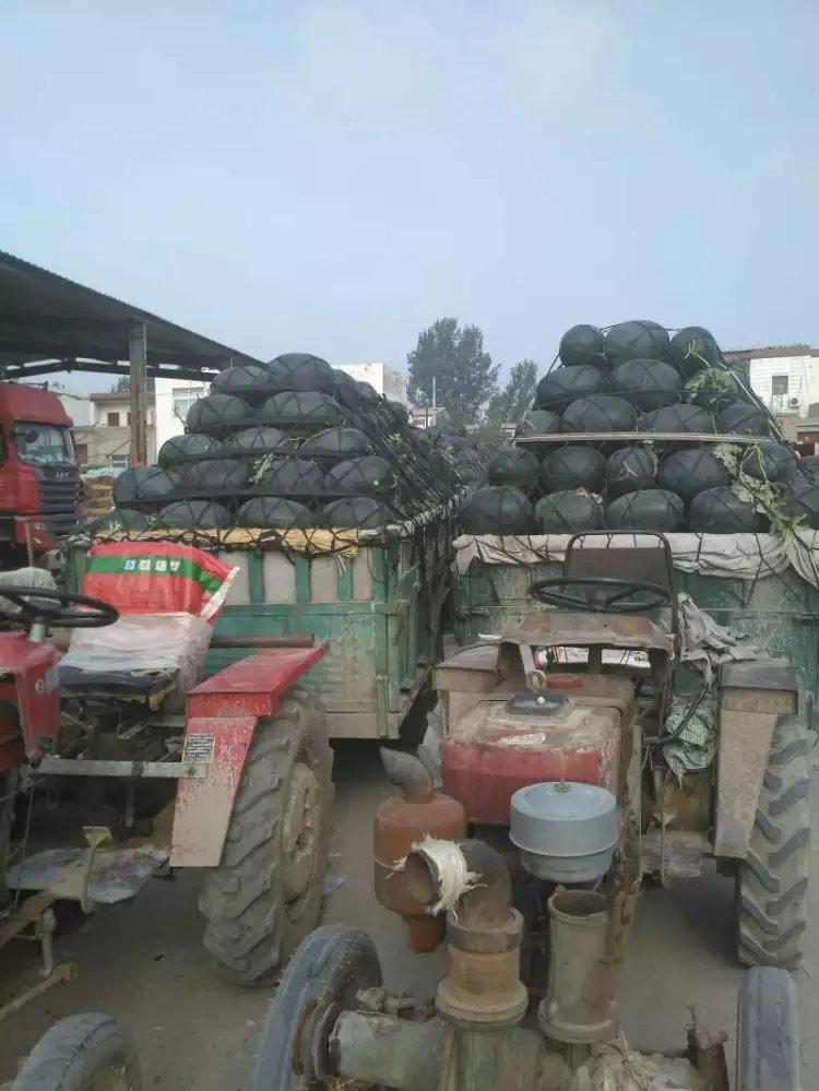 大量供应西瓜各种品种,价格优惠,河南西瓜,开封西瓜,西瓜网