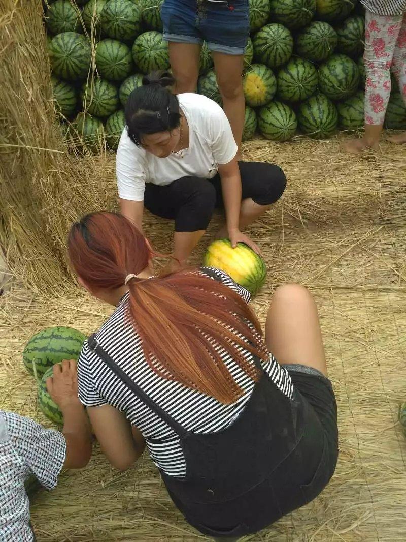 大量供应河南西瓜2017年河南西瓜已大量上市