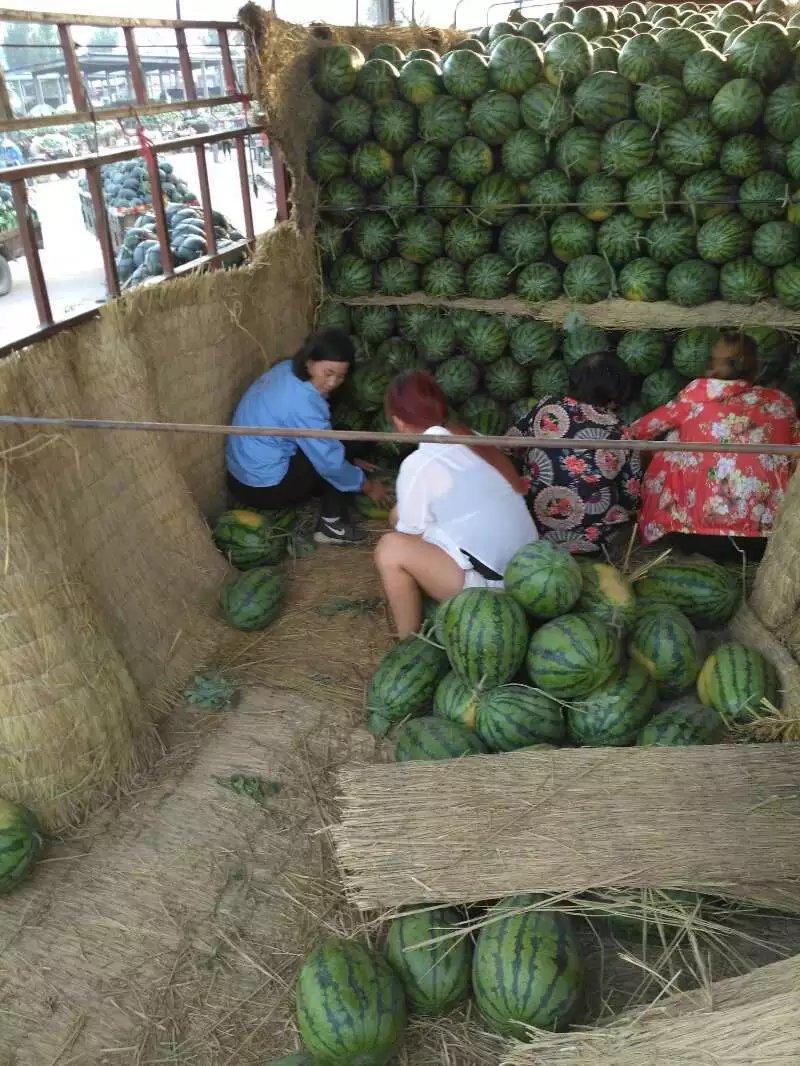 河南西瓜(2017年产地价格)开封西瓜