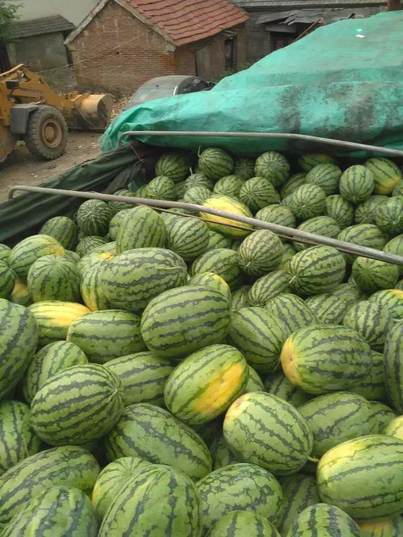 河南西瓜几月上市-河南西瓜供应商-河南西瓜代收
