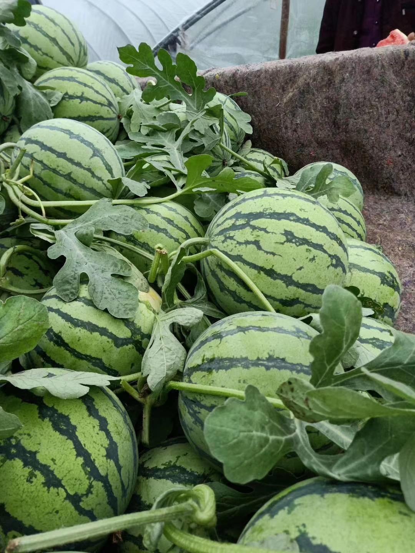 河南西瓜哪里量大-开封西瓜市场-通许西瓜供应